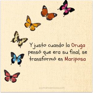 Imágenes De Mariposas Con Frase Guía De Mariposas Del Mundo